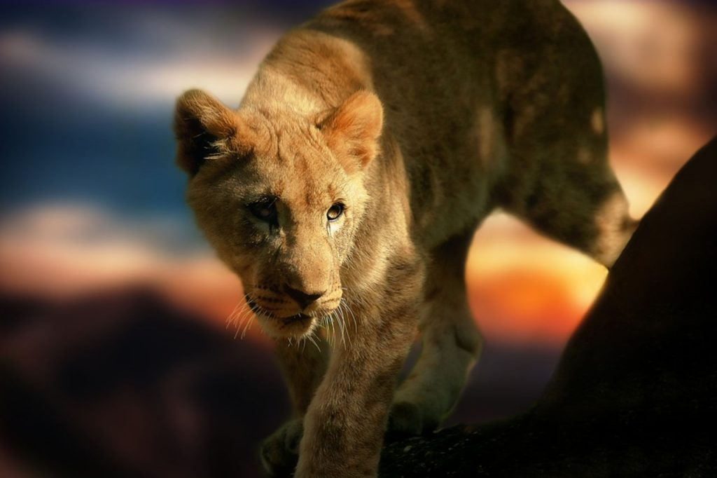 """Критики признали провальным новый фильм """"Король лев"""""""